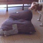 Poor fitting dog bed cover