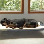 raised dog bed pix for bed styles page